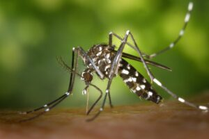 How to Fix a Mosquito Problem